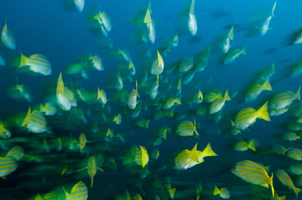 Les dessous chics des atolls