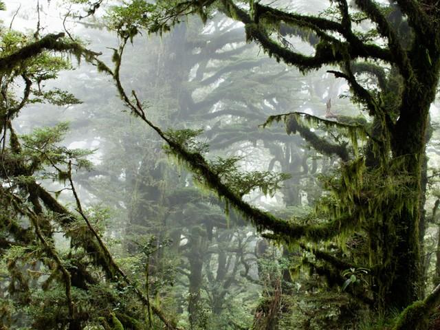 Parc national Te Urewera