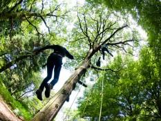 En haut de mon arbre, je vivais heureux...
