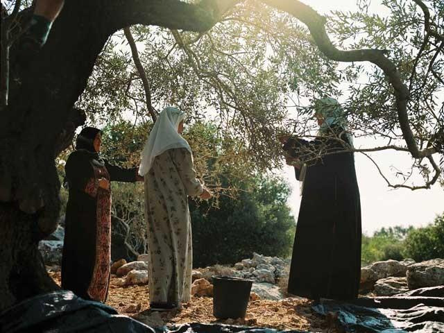 Palestine - La voie de l'olivier