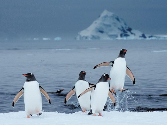 Antarctique - On dirait le Sud