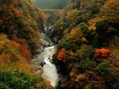 Shikoku - La chasse aux feuilles rouges