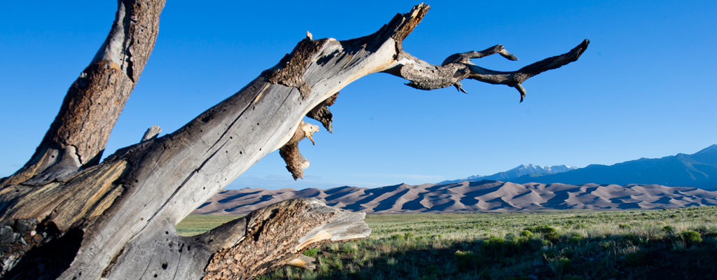 Colorado - De couilles et d'os