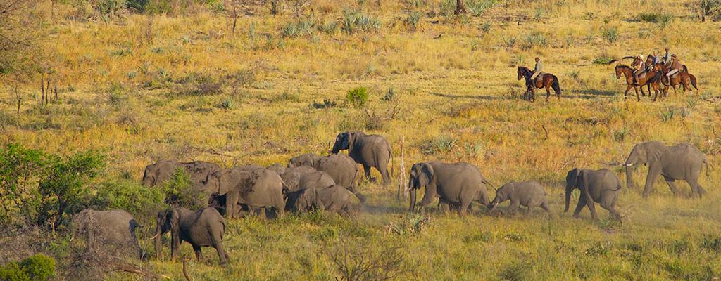 L'Okavango au galop - Bostwana
