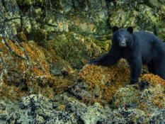 La vie sauvage en Colombie britannique - A/R Magazine voyageur 2018