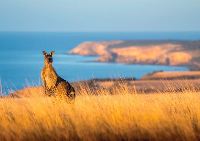 5 bonnes raisons d'aller faire un saut sur l'île Kangourou - A/R Magazine voyageur 2019