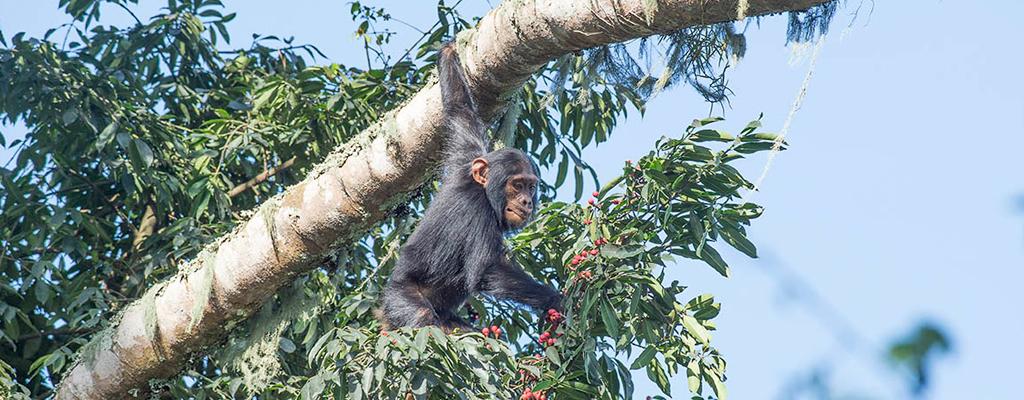 Le Rwanda sort des brumes