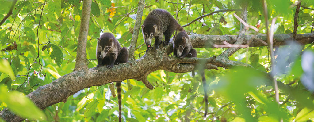 Costa Rica - Corcovado, la forêt enchantée